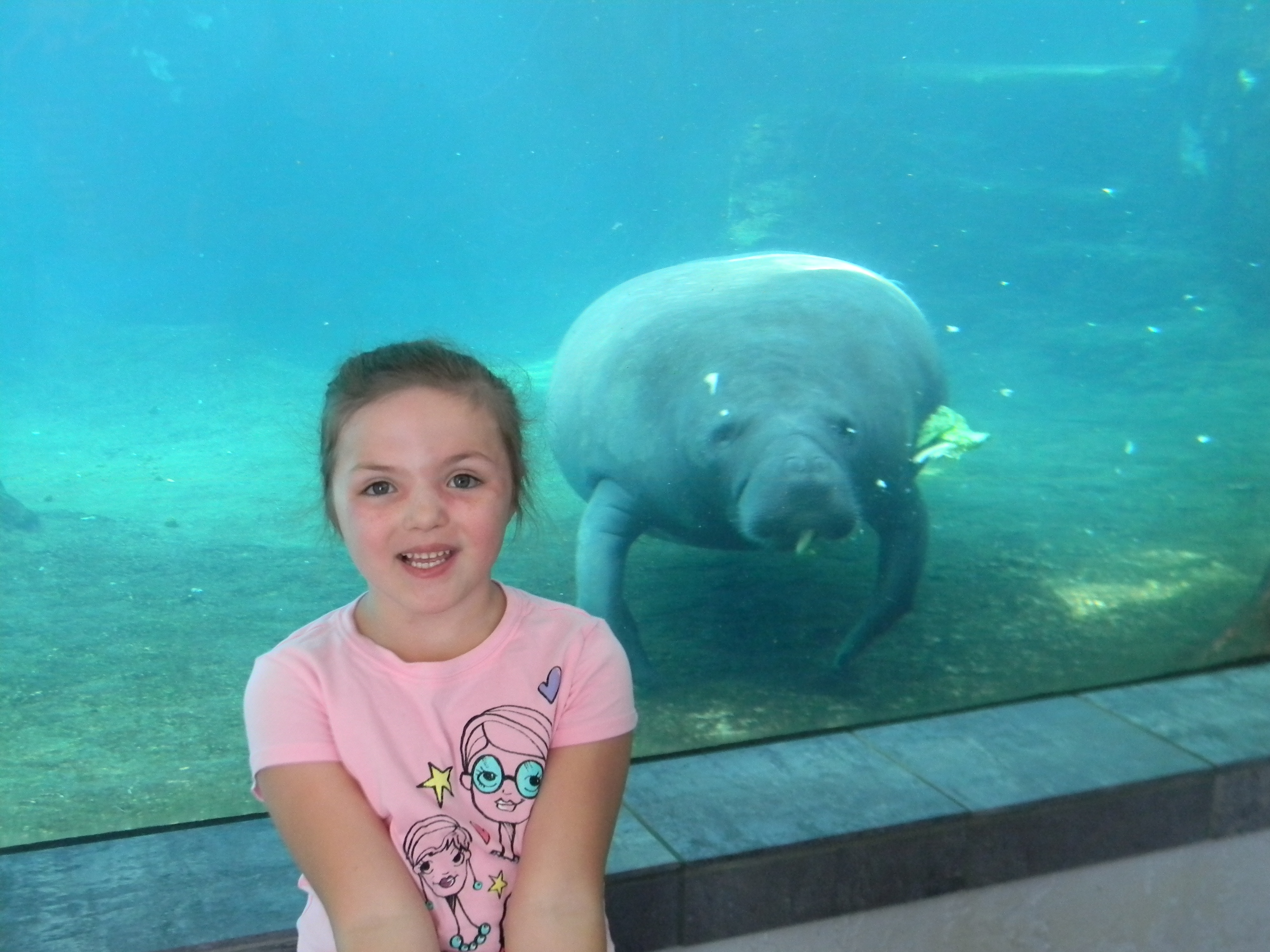 Sarasota, Florida: Planning a fun vacation for the whole family! www.mytravelingkids.com